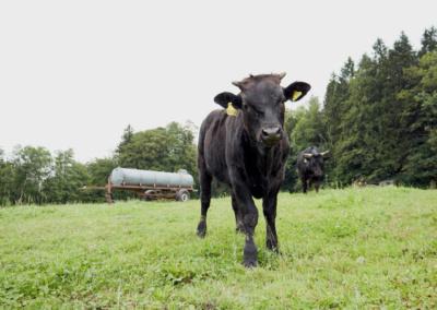 Wamayu Rinder Waging